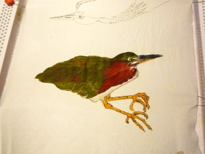 green heron with color applied