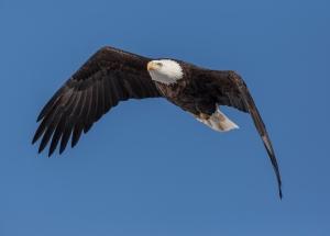 Eagle_Iowa_1