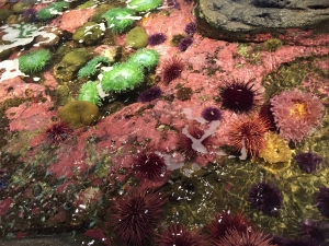 coral_urchins