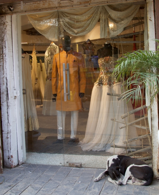 wedding_clothes_sleeping_dog