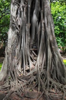 Big_tree