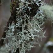 moss_lichen
