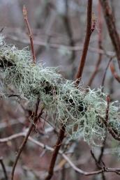 moss_lichen_3